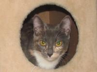 Кошка из Беларуси